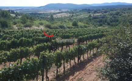 GEMINIBROKER Vám ponúka na predaj chatu s viničom a ovocným sadom