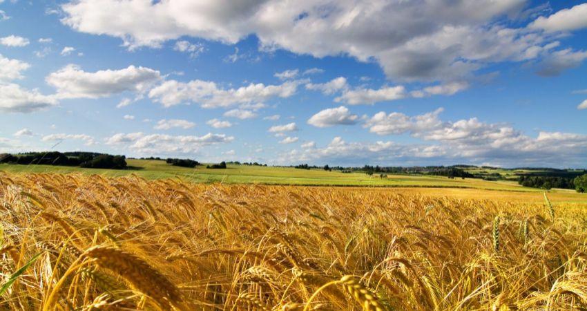 48055m2 poľnohospodárskej pôdy Šurany na predaj