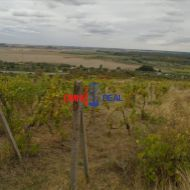 Vinohrad nad Svätým Jurom, lokalita Tepluše - 2040 m2