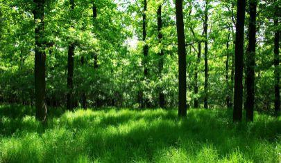VRÍCKO lesný pozemok vo výmere 22870 m2 okr. Martin
