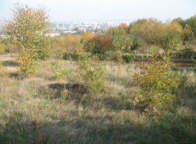 Maxfin Real - Ponúkame na predaj stavebný pozemok v Nitre, časť Mlynárce