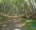 Krásny pozemok pod lesom pre rodinnú farmu, 3392 m2, Kálnica, okr. Nové Mesto n. Váhom
