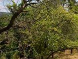 Krásny slnečný 10á pozemok vo vilovej štvrti obklopený prírodou, BA IV
