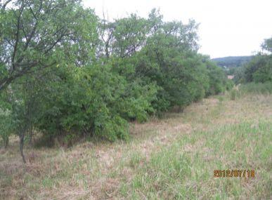 Predaj veľkého pozemku 20x200 m pre výstavbu rodinných domov v obci Častá.-lukratívna cena.