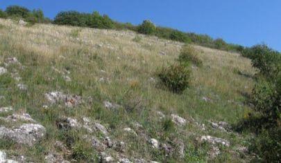 Veľký pozemok v Zádielskej doline s výhľadom na Turniansky hrad, predaj