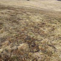Trvalý trávnatý porast, Stožok, 2804 m²