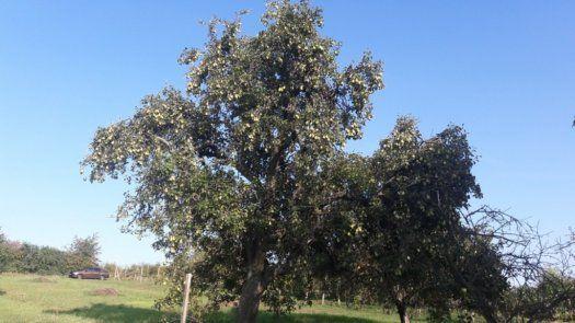 Záhrada-Predaj-Levice-5900.00 €