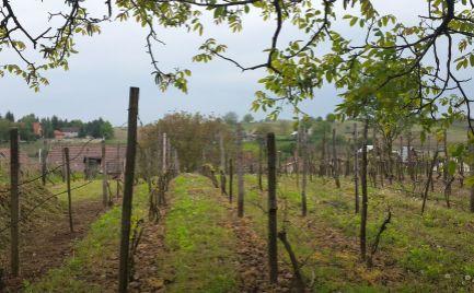 Pekný vinič s krásnym výhľadom kúsok od lesa a 100 m od dedinky Bátorové Kosihy