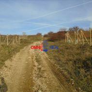 Obrábaný vinohrad nad Pezinkom - Škridláky, 22 ára