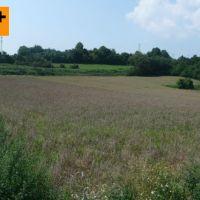 Orná pôda, Kolárovice, 6000 m²