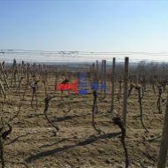 Vinohrad so záhradou o veľkosti 38 árov aj s chatkou v lokalite Kúty