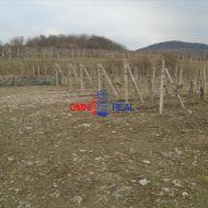 Obrábaný vinohrad Pezinok, lokalita Za Záhumenicami - 39 árov, aj ako záhrada.