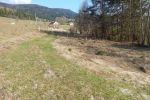 PREDAJ : krásny pozemok na výstavbu rekreačnej chaty v lokalite Čeljenec pri Ľubietovej