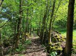 EXKLUZÍVNE! Usadlosť obklopená prírodou s obrovským pozemkom na samote