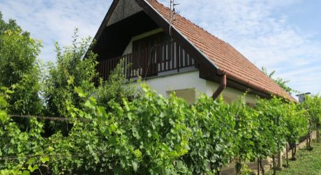 Chata na predaj Bátorove Kosihy. Vinohrad