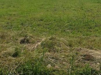Predáme stavebný pozemok - Maďarsko - Novajidrány