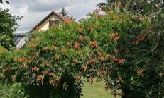 PREDANE, slnečný pozemok so starším domom v Trenčianskych Biskupiciach - výhradne v XX REAL !