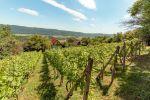 Chata s vinicou, predaj, Hrušov, Okres - Rožňava