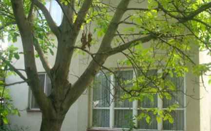 REZERVOVANÝ - Priestranný 4 izb rodinný dom v slušnom pôvodnom stave v Šamoríne
