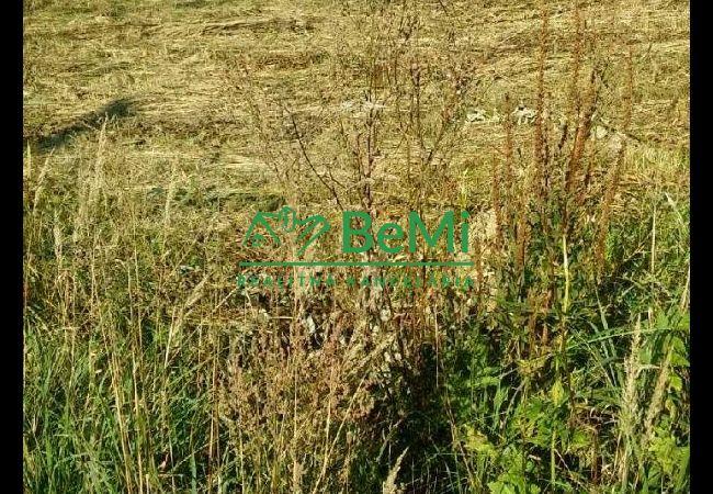 Predaj:Stavebný pozemok v Čadci Horelici(394-14-JAS)