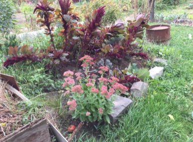 Predám členstvo v zahradkárskej oblasti malé pálenisko 460 m2 zahrada s chatkou.