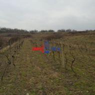 Na predaj obrábaný vinohrad Limbach, 3332 m2,