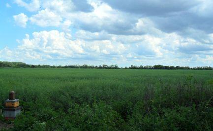 Predám pozemok BA V. - Petržalka - 4456m2.