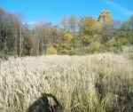 Slnečný pozemok Dolná Súča - 3745 m2, časť U Repov, Ševova kopanica