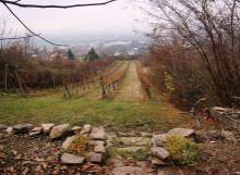 Krásny pozemok  s  vinicou  nad obcou Vinné