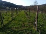 Obrábaný vinohrad, 1475m2, BA-Vajnory