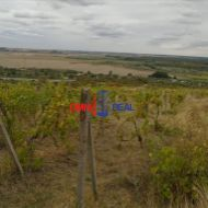 Neobrábaný vinohrad Pezinok, lokalita Stredná Hora - 30 árov