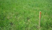 Predaj pozemku na poľnohospodárske účely