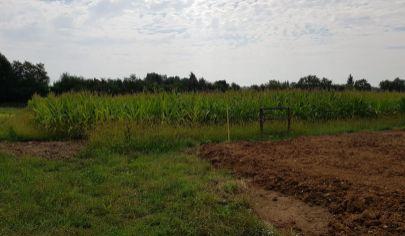Sľažany, stavebný pozemok, až 7000 m2, okr. Zlaté Moravce
