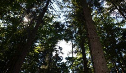IVANOVCE lesný pozemok 90 294 m2, okres Trenčín