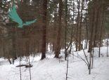 Lesnatý pozemok na predaj