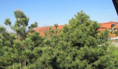 Hľadám pre reálnu klientku rodinný dom v Bratislave I- Staré Mesto, aj stavebný pozemok