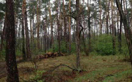 Predaj – rekreačný pozemok s časťou lesa – Borský Svätý Jur, Tomky – EXPISreal