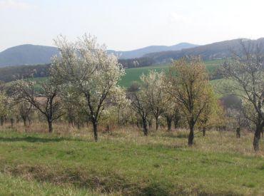 Rekreačný pozemok 5270m2, Podkylava, Myjava