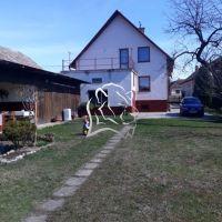 Rodinný dom, Kameňany, 2742 m², Kompletná rekonštrukcia