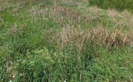 Pekný tichý pozemok v Komárne časť Nová Stráž o výmere 3207m2