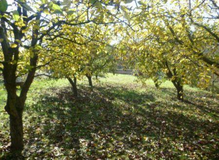 Pozemok s ovocným sadom v Haláčovciach na predaj