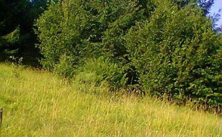 NA PREDAJ veľký pozemok 10 800m2 - 1ha, prírodná rezervácia