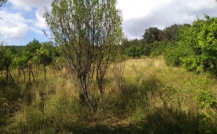 Záhrada - ovocný sad v Nitre