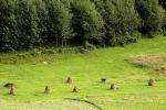 trvalý trávnatý porast - Horný Vadičov - Fotografia 6