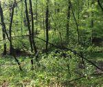 Rekreačný pozemok v lese, 500 m2, Mníchova Lehota