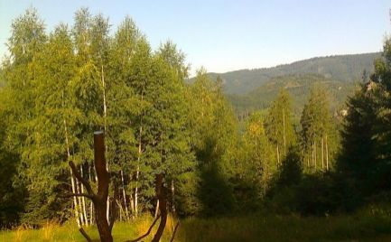 Rekreačná chata na čistinke v Osrblí-Štomp - nádherné prostredie