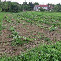 Orná pôda, Hontianske Trsťany, 1375 m²