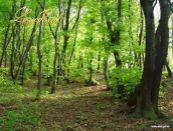 Na predaj lesy