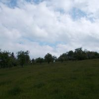 Záhrada, Nová Baňa, 5000 m²
