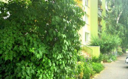 REZERVOVANÉ Ponúkame na predaj 3-izb byt v meste Veľké Kapušany, okr. Michalovce